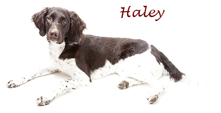 Haley_site