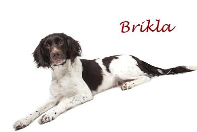 brikla_liggend