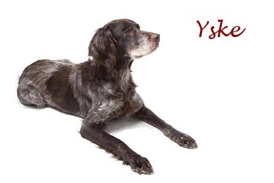 Yske_liggend