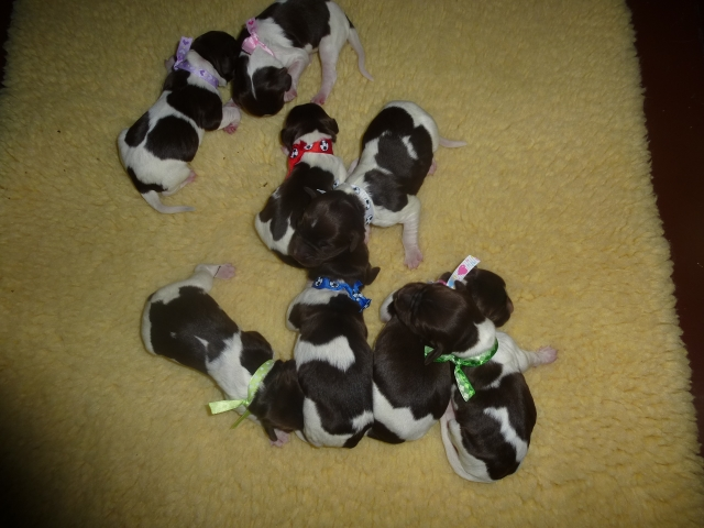 PuppiesHaleyKlein